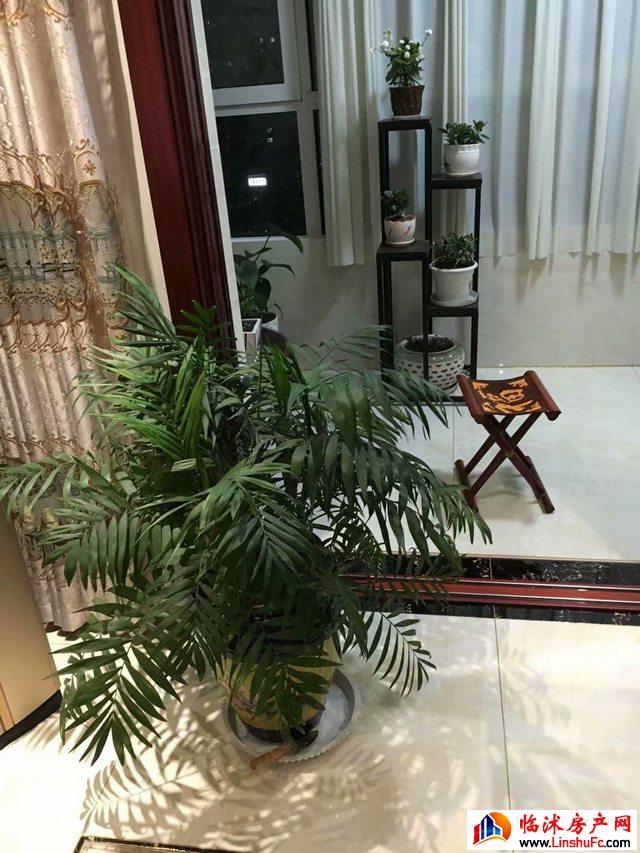 沭河花园  3室2厅 165.0平米 豪华装修 120万元